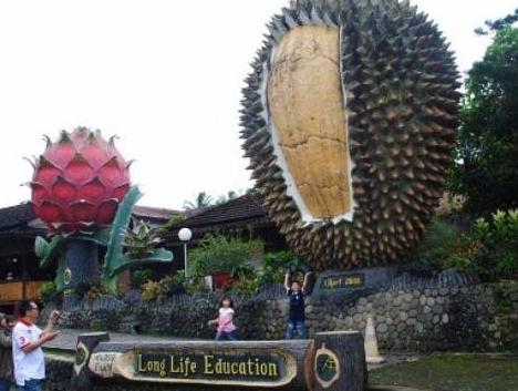 Wisata Warso Farm Surganya Pecinta Durian Di Kota Bogor