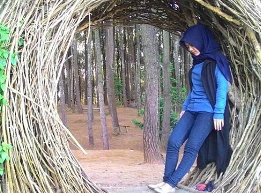 Hutan Pinus Pengger, Spot Wisata Alam Yang Instagramable