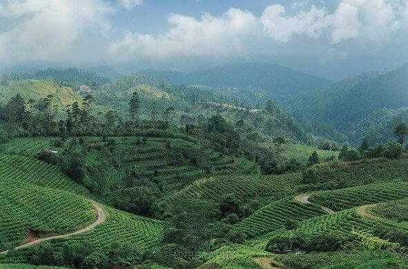 Malino Highland, Menikmati Pesona Alam Di Gowa Sulawesi Selatan